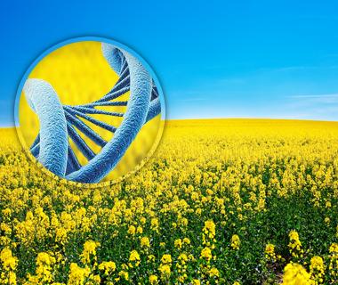 Identification Génétique (environnement, agroalimentaire)